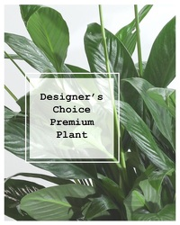 Designer's Choice Premium Planter
