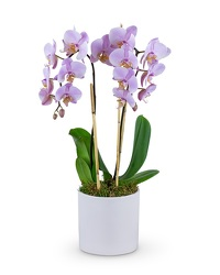 Phalaenopsis Orchid from Eagledale Florist in Indianapolis, IN