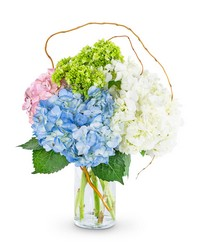Sweet Hydrangea from Eagledale Florist in Indianapolis, IN